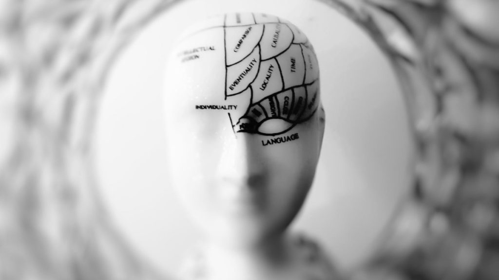 Image of a phrenology skull in focus to evoke ideas about cognitive development.